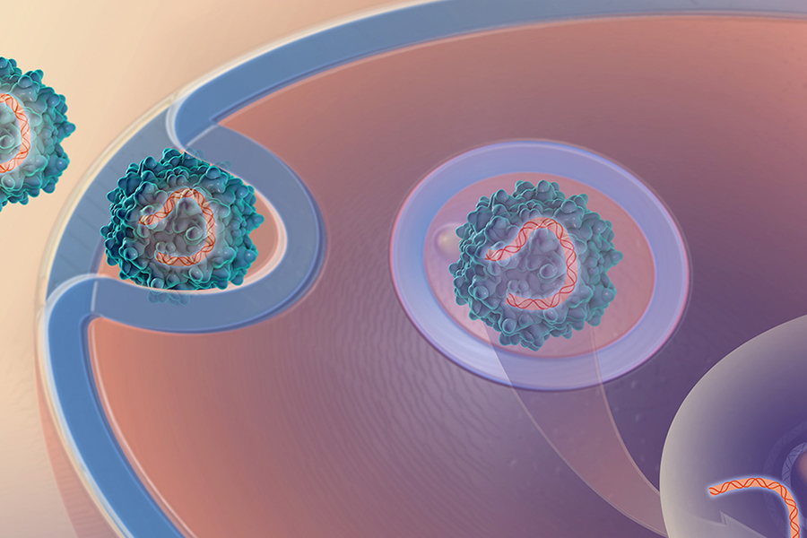 Illustration of a virus delivering genetic material into a cell.