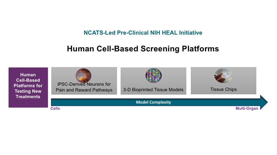 "NCATS-led Preclinical NIH HEAL Initiative. Human Cell-Based Screening Platforms and Novel Drugs to Treat Pain, Addiction, and Overdose. A diagram showing NCATS's plans to make human cell-based platforms available as models to test new treatments for pain, addiction, and overdose. Labeled ""Human Cell-Based Platforms for testing new treatments,"" the diagram shows a range of model complexity from cells to multi-organ models, illustrating that these platforms will enable researchers to test and study potential drugs in human cells, tissues, and organs, before they are administered to humans in clinical trials. It begins with a microscopic image of neurons derived from induced pluripotent stem cells, followed by a microscopic image of 3-D bioprinted tissues, and finally followed by an image of tissue chips, which are tissues that have been developed and organized to represent functioning and connected organs."