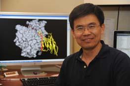 Xin Hu, Ph.D.