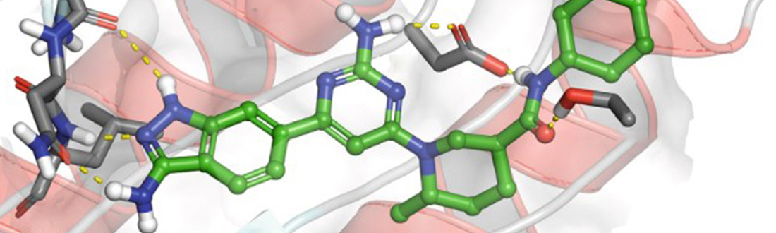A compound attaches to a protein target.