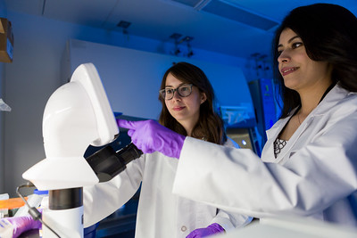 Emily Lee and Atena Farkhondeh Kalat discuss cell results displayed on a microscope in the Therapeutics for Rare and Neglected Diseases Biology Lab at NCATS. Credit: Daniel Soñé Photography
