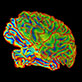 Multi-color image of brain for brain imaging research
