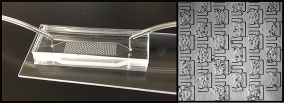 The image on the left shows the liver chip. The image on the right is a close-up that shows how the liver spheroids are placed into the device and ready for study.