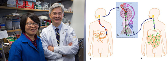 Left: Xinshu (Grace) Xiao, Ph.D., and David T. W. Wong, D.M.D., D.M.Sc., in the lab. Right: Graphic showing the mechanism of salivary exRNA development in pancreatic cancer.