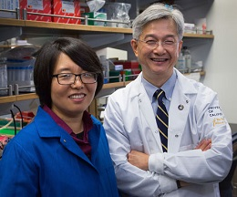 ExRNA saliva experts Xinshu (Grace) Xiao, Ph.D., and David T.W. Wong, D.M.D., D.M.Sc. (University of California, Los Angeles Photo/Reed Hutchinson)