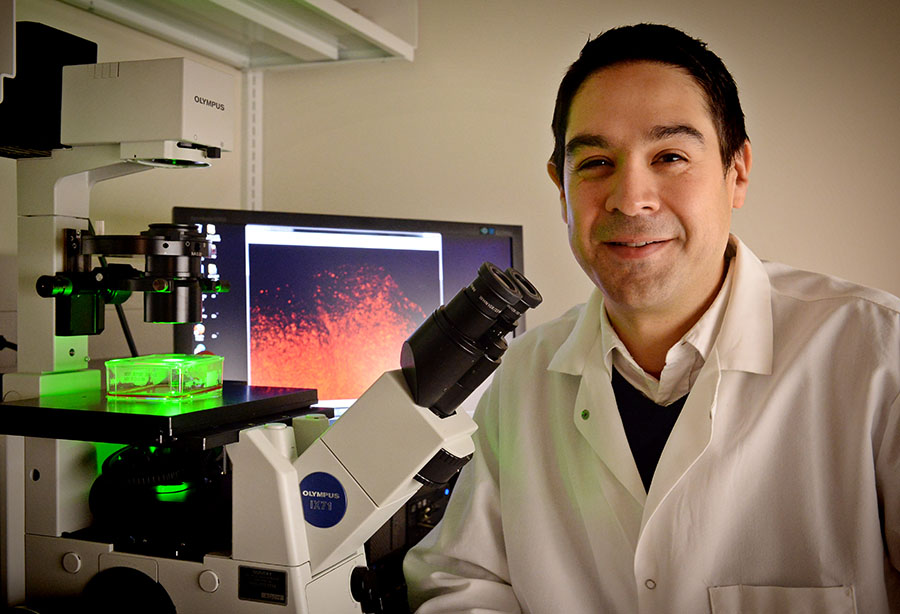 Cell biologist Shawn Hingtgen, Ph.D., in his lab