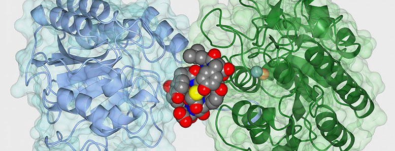 The cyclic peptide ipglycermide (iPGM) binds to an iPGM enzyme, blocking the enzyme's activity