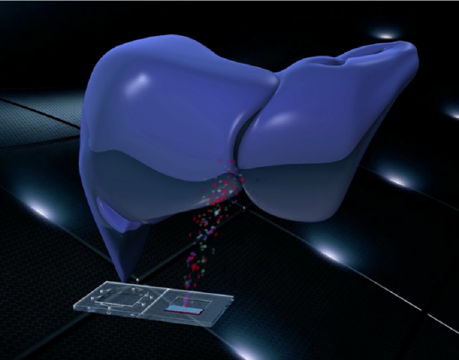 Animation still of the liver from the Tissue Chip video