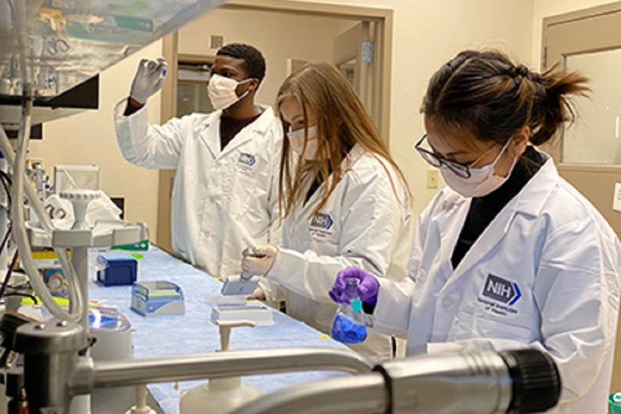 NIH laboratory team performs serology to detect antibodies to the SARS-CoV-2, the virus that causes COVID-19.  NIBIB photo.