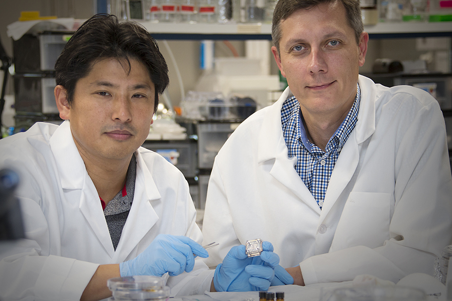 Researchers holding a tissue chip