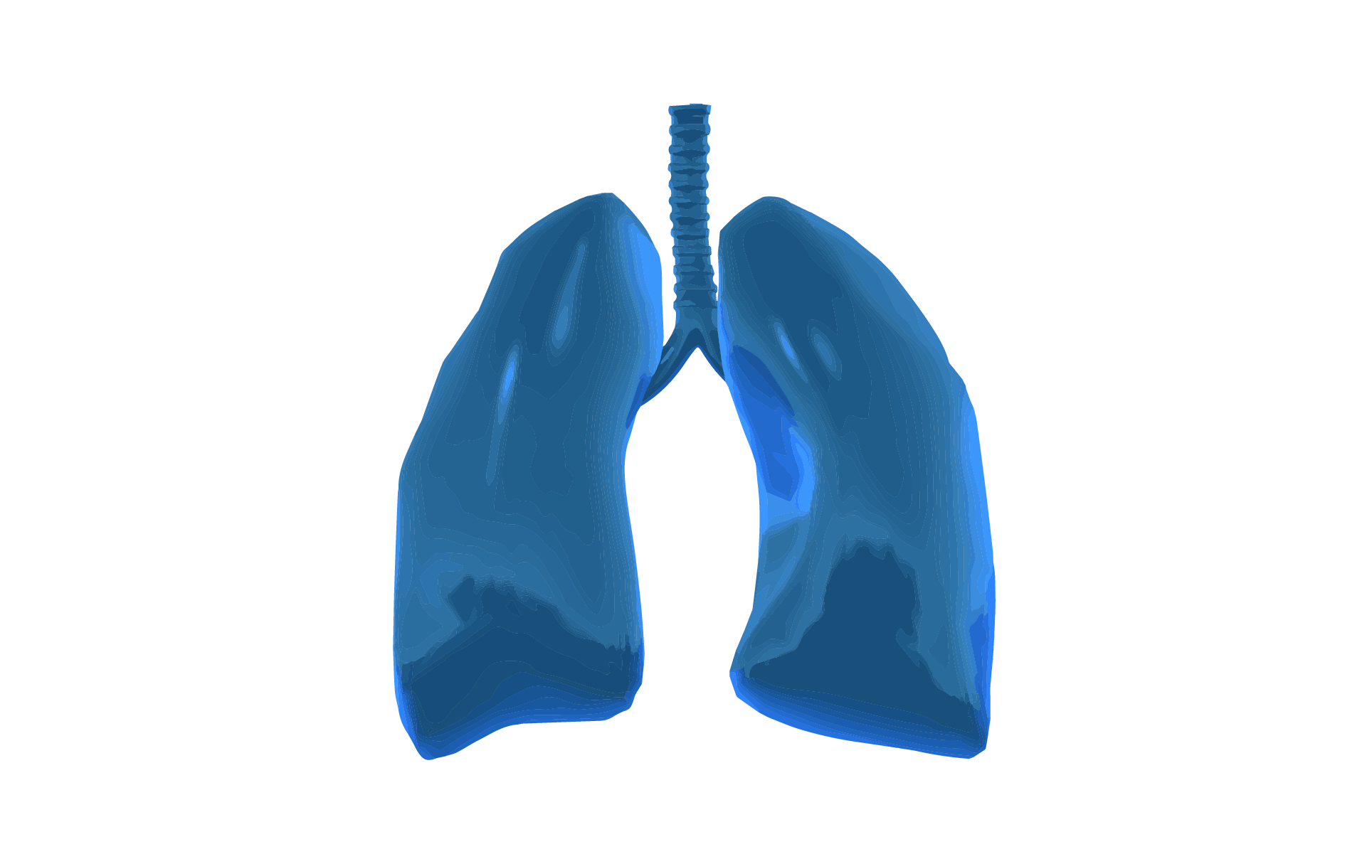 A 3D graphic image of a set of lungs